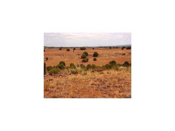 61 Juniperwood Ranch, Ash Fork, AZ 86320 Photo 4