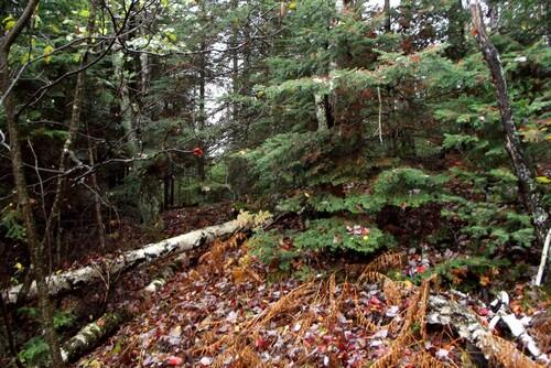 Lot 1 - 5813 Hwy. 70, Eagle River, WI 54521 Photo 3