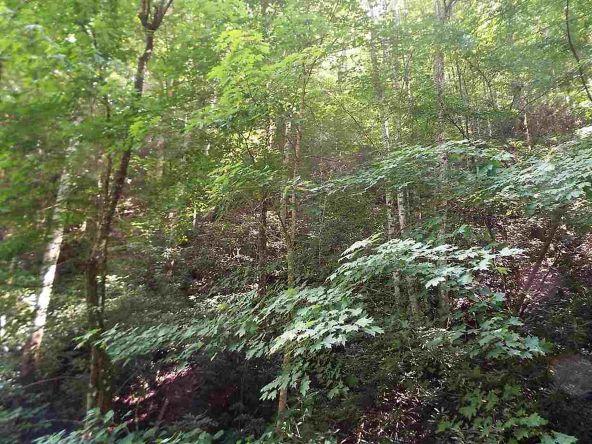 Lots 537 & 538 Deep Hollow Rd., Gatlinburg, TN 37738 Photo 23