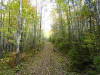 Home for sale: 320 Acres Moose, Republic, MI 49879
