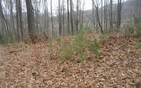 Home for sale: Lot 1 Trail Tree Dr., Blairsville, GA 30512
