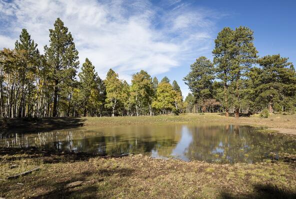 Tbd Eagle's. Nest Rd., Lot 2, Placerville, CO 81430 Photo 15