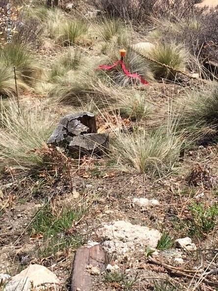 11179 E. Upper Goat Hill, Mount Lemmon, AZ 85619 Photo 11