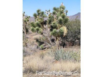 17289 N. Palo Verde Dr., Dolan Springs, AZ 86441 Photo 1