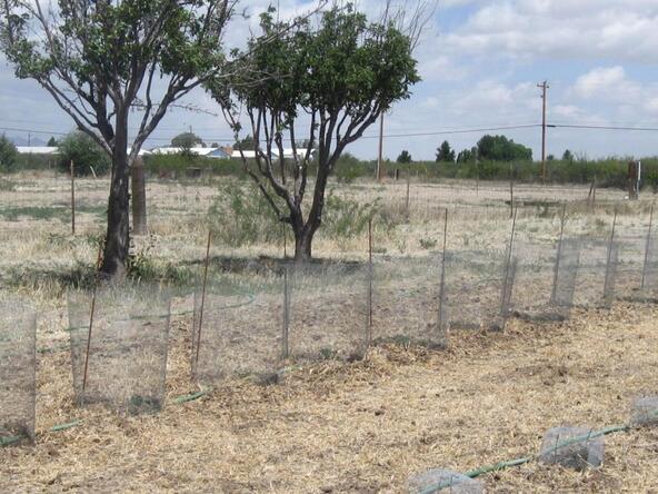 2319 W. Airport W, Willcox, AZ 85643 Photo 29