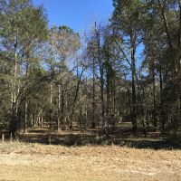 Home for sale: Lot 609 Blue Heron Ln. N.E., Shellman Bluff, GA 31331