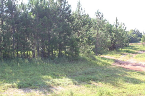 19815 County Rd. 12, Foley, AL 36535 Photo 6