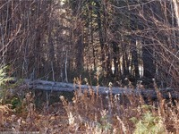 Home for sale: 143 Oak Hill Dr., Woodstock, ME 04219