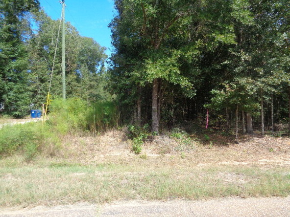 31.2 Ac Johnny Murphy Rd., Dothan, AL 36301 Photo 19