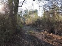 Home for sale: 209 Williams Bend Rd., Albertville, AL 35951