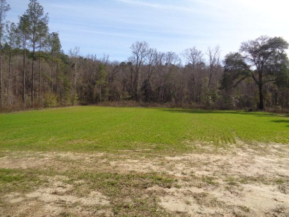 275+/-Ac Cty Rd. 46/Cty Rd 97, Abbeville, AL 36310 Photo 42