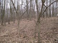 Home for sale: Rd2 Roberts Ridge Rd., Moundsville, WV 26041