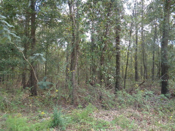 31.2 Ac Johnny Murphy Rd., Dothan, AL 36301 Photo 30