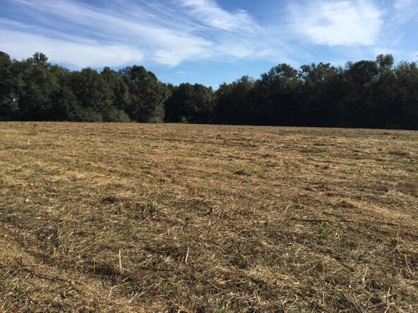 86 Acres Fletcher Smith Rd., Dothan, AL 36301 Photo 7