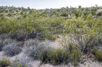 Home for sale: 6200 N. Canyon Rd., Rimrock, AZ 86335