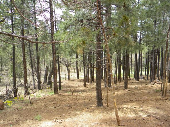 754 E. Rim Rd., Pinetop, AZ 85935 Photo 12