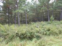 Home for sale: Lot #3 Moore Mountain Ln., Ellenboro, NC 28040