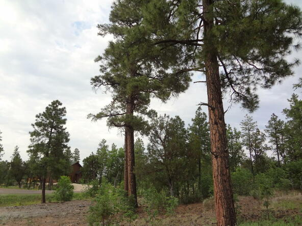 7227 Andromeda Way, Lakeside, AZ 85929 Photo 70