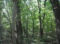 Home for sale: Lot 11 County Rd. J, Lyndon Station, WI 53944