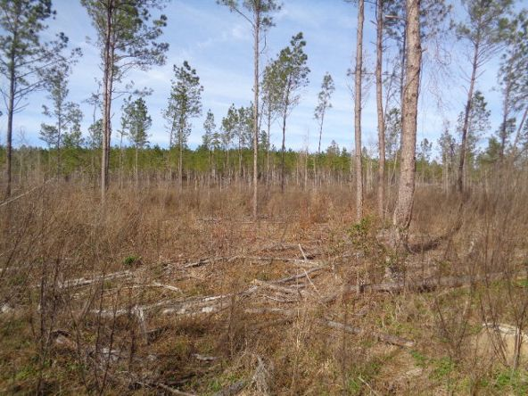 275+/-Ac Cty Rd. 46/Cty Rd 97, Abbeville, AL 36310 Photo 29