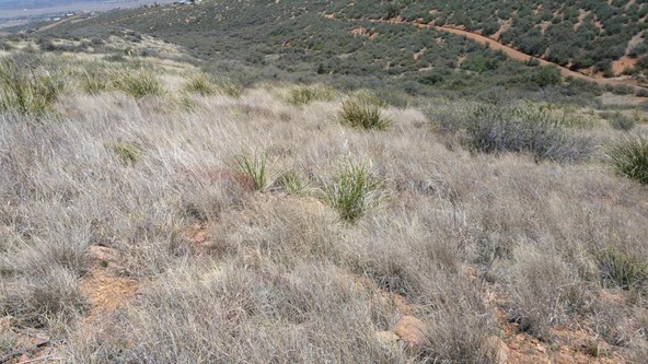 9570 E. Chestnut Hill Avenue, Dewey, AZ 86327 Photo 2