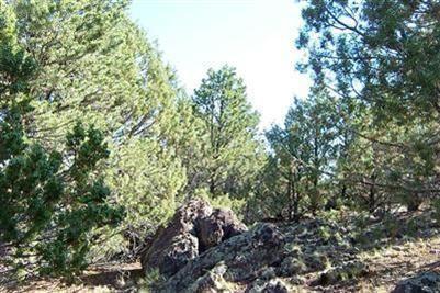 1419 W. Maverick Ln., Williams, AZ 86046 Photo 5
