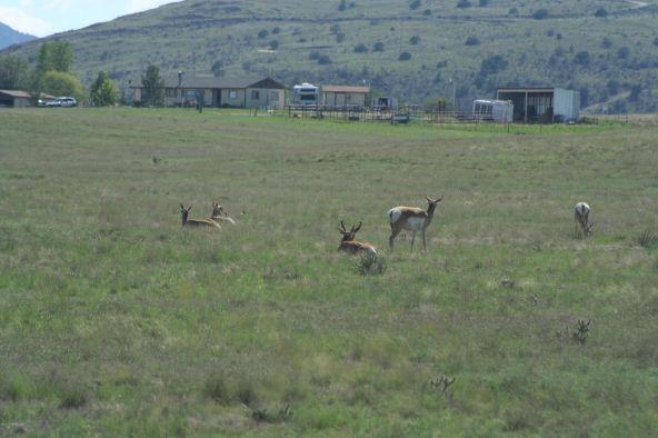 1165 S. Table Mountain Rd., Chino Valley, AZ 86323 Photo 30