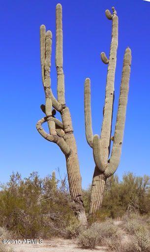 86xx E. Via Dona Rd. --, Scottsdale, AZ 85266 Photo 55