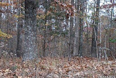 00 Roby Rd., Jacks Creek, TN 38347 Photo 7