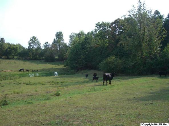 2830 County Rd. 107, Scottsboro, AL 35768 Photo 8