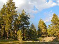 Home for sale: 0 Eagle/Rainbow, Angelus Oaks, CA 92305