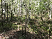 Home for sale: 104.65 Acres Utcane Rd., Mineral Bluff, GA 30557