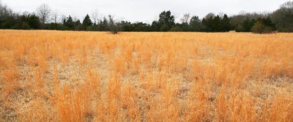 278-V Hwy. 64 E., Conway, AR 72032 Photo 10