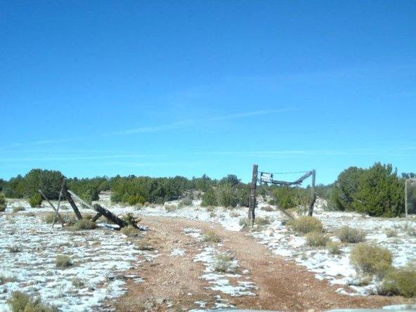 459 Hardrock Rd., Seligman, AZ 86337 Photo 46
