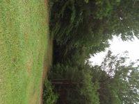 Home for sale: 38 Acres Newburg Rd., Haleyville, AL 35565