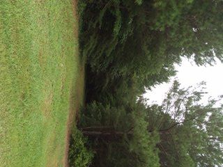 38 Acres Newburg Rd., Haleyville, AL 35565 Photo 1