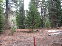 Home for sale: Wild Rose Ln., Shaver Lake, CA 93664