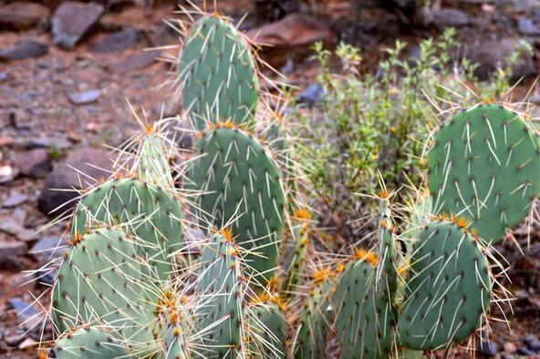 374xx N. Schoolhouse Rd., Cave Creek, AZ 85331 Photo 21