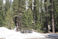 Home for sale: 51082 Jeffery Pine Dr., Soda Springs, CA 95728