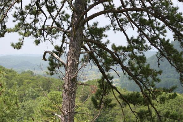 Mount Pleasant Rd., Vonore, TN 37885 Photo 26