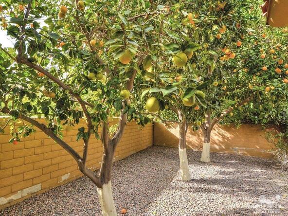 48905 Avenida El Nido, La Quinta, CA 92253 Photo 36