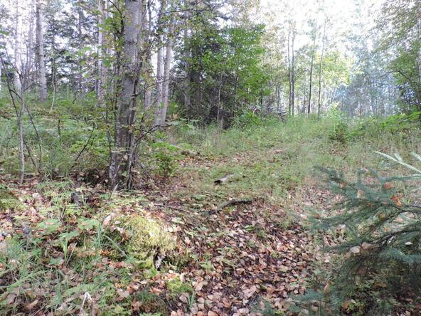 4041 W. Voss Dr., Wasilla, AK 99623 Photo 11