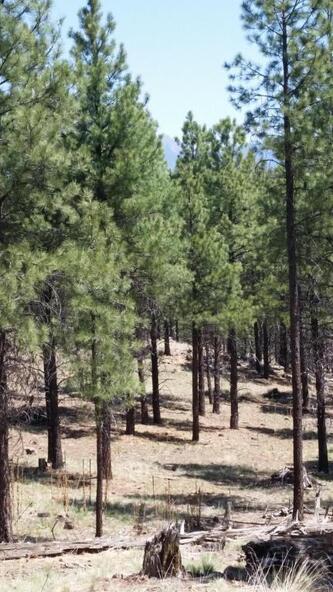 6300 W. Belle Springs Way, Flagstaff, AZ 86001 Photo 7