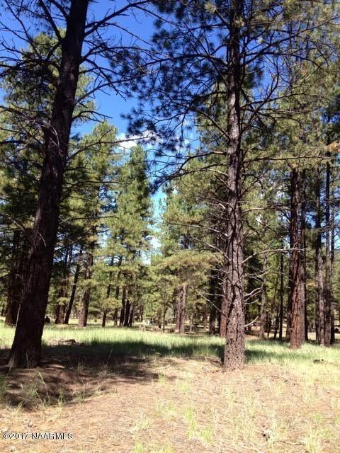 125 E. Mount Elden Lookout Rd., Flagstaff, AZ 86001 Photo 6