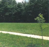 Home for sale: 4515 Luther Path, Saint Joseph, MI 49085