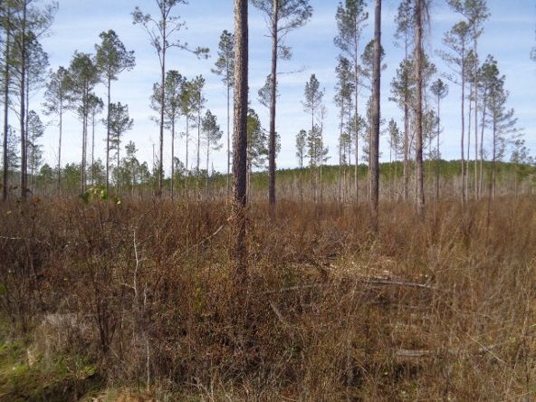 275+/-Ac Cty Rd. 46/Cty Rd 97, Abbeville, AL 36310 Photo 45