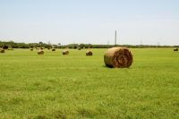 Home for sale: 0 W. Hwy. 56, Whitesboro, TX 76273