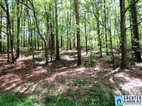 32 Acres Lystra Rd., Ashland, AL 36251 Photo 1
