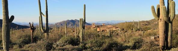 41927 N. Saguaro Forest Dr., Scottsdale, AZ 85262 Photo 16