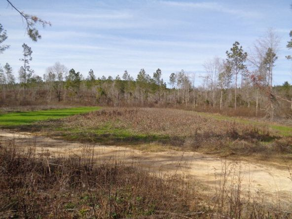 275+/-Ac Cty Rd. 46/Cty Rd 97, Abbeville, AL 36310 Photo 36